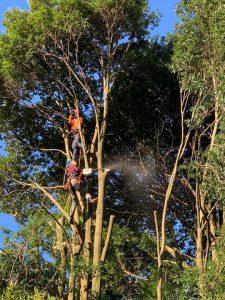 ロープクライミング、ツリークライミング、造園、施工、剪定、高木、枝下ろし、ガーデン、園路、エクステリア、無農薬、消毒、オーガニックガーデン、レンガ